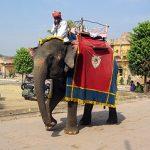 Tour du monde : le Wi-Fi en Inde du Nord